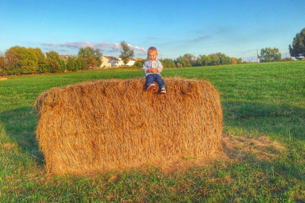Charlie on a haystack