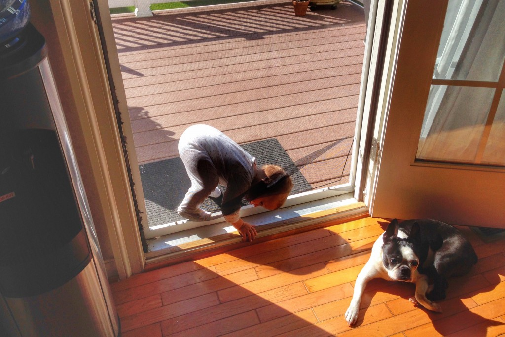 Mason crawls through screen door