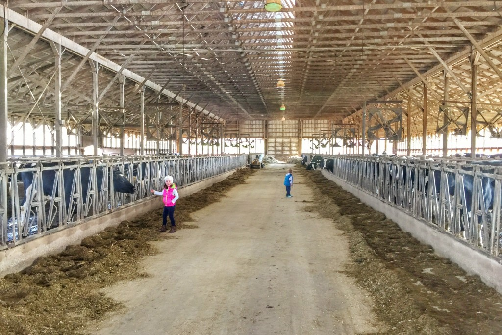 Ava and Charlie visit Rocky Point Dairy Farm